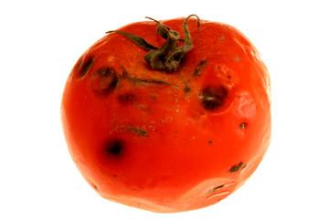 rotten tomatoe 2