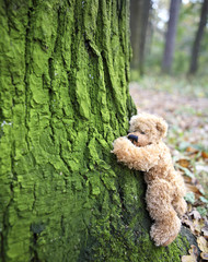 teddy bear climbing tree....