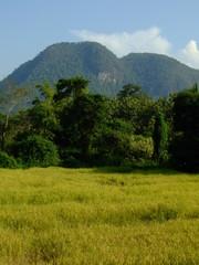 paysage, thailande