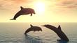 roleta: dolphin