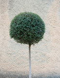 round tree poster