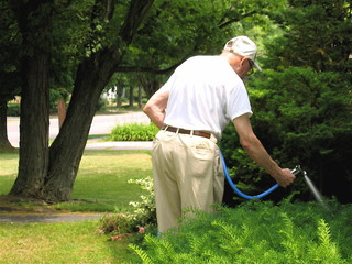 senior citizen watering yard