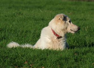 dogs on alert