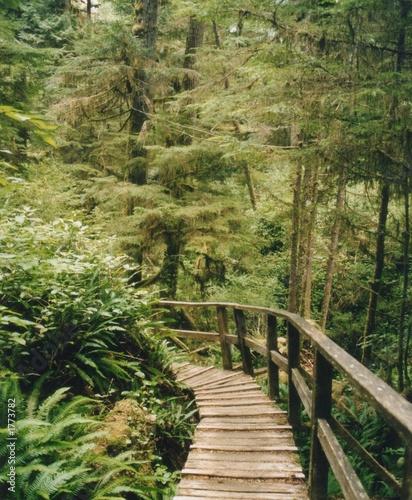 weg regenwald kanada
