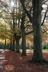 autumn beechwood 4