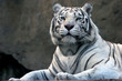 Quadro bengali tiger in zoo