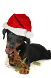 doggy with christmas hat poster