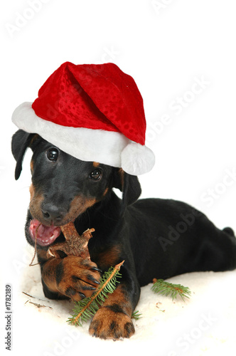 poster of doggy with christmas hat