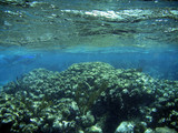 underwater coral reef with water surface poster