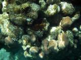 fancy underwater coral poster
