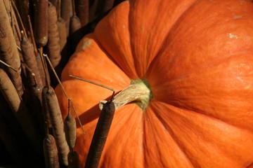 pumpkin close up