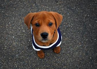 pup in t
