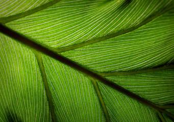 green leef