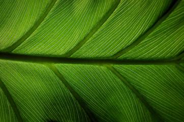 green leaf #2