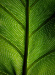 green leaf #3