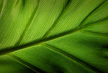 green leaf #4