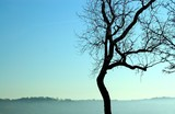 bare tree and blue sky poster