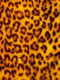 Fototapete Hintergrund - Wildlife - Säugetiere