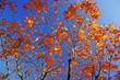 feuilles d`automne 1