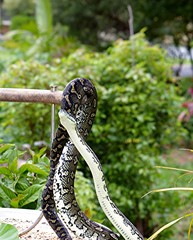 friendly python 4.