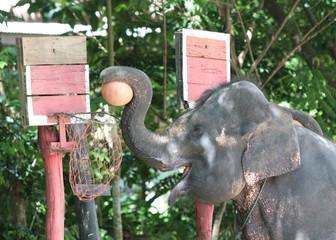 elefantendunking