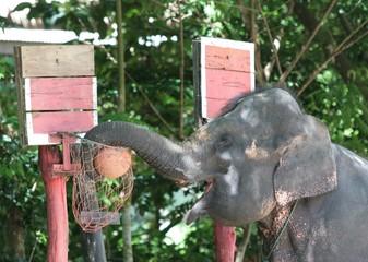 elefantendunk
