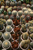 collection de cactus poster