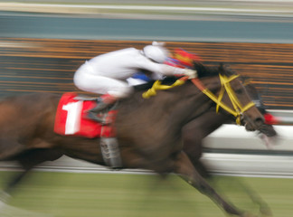 neck and neck horse race -- motion blur