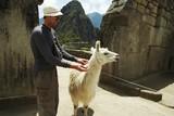 tourist and llama poster