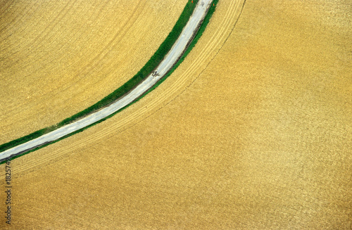 aerial wheat field