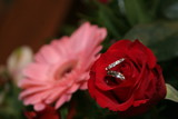 platinum rings, bands in red rose with pink gerber poster