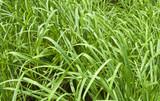 grass patch poster