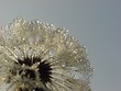 wheel of droplets