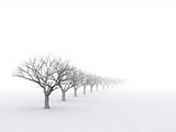 Fototapety trees in misty haze