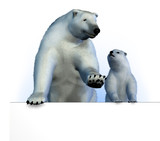 polar bears on sign edge. poster