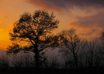 dark autumn treescape