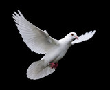 white dove in flight 7