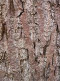 alder tree bark background 1 poster