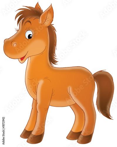 Fotobehang Pony foal