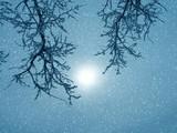 winter fantasy poster