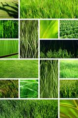 herbe et verdure