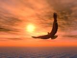 Fototapeta eagle_variant
