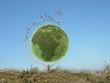 green globe tree