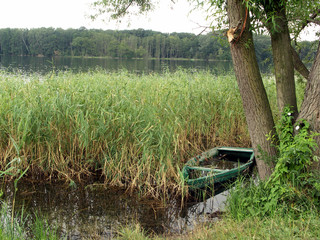 lake, reeds and boat