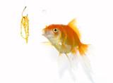 goldfish and jewel poster