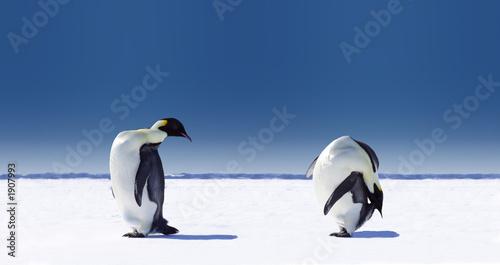 penguin sports