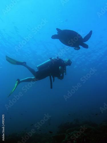 Aluminium Schipbreuk turtle diver