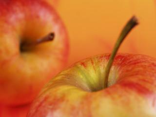 rote äpfel aus dem alten land 2