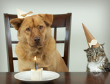 pet birthday party poster