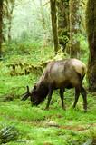 rainforest habitat poster
